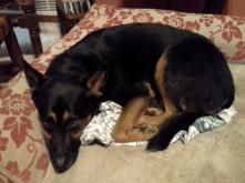 My sleepy dog
