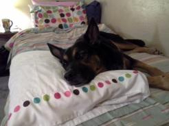 Dante took over my bed