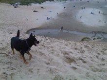 Dante at the beach