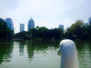 Lumpini Park Swan
