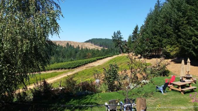 Brigadoon vineyards