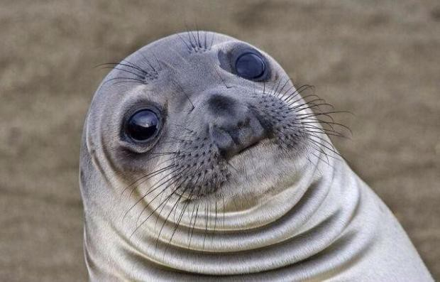 This is the awkward moment Sealion, and my face as I tried to teleport somewhere else.