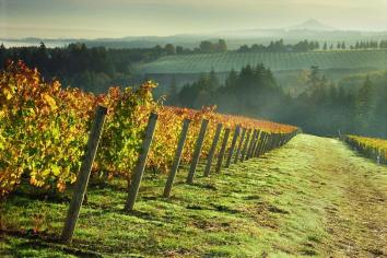 Willamette Valley | An adventure from Evergreen Escapes: Wine & Waterfalls