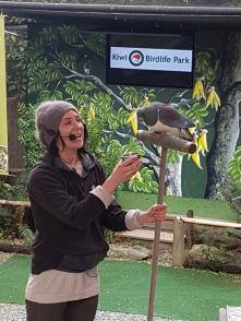 kereru-pidgeon