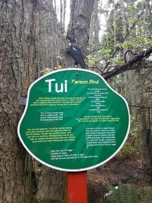 tui-parson-bird